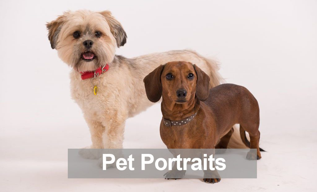 Pet Portraits by Harrison Lord Photography