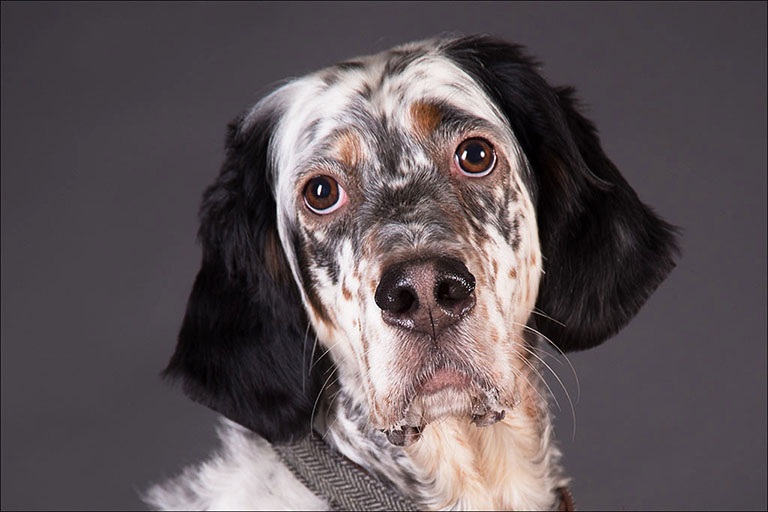 pet photography by Harrison Lord Photography 5