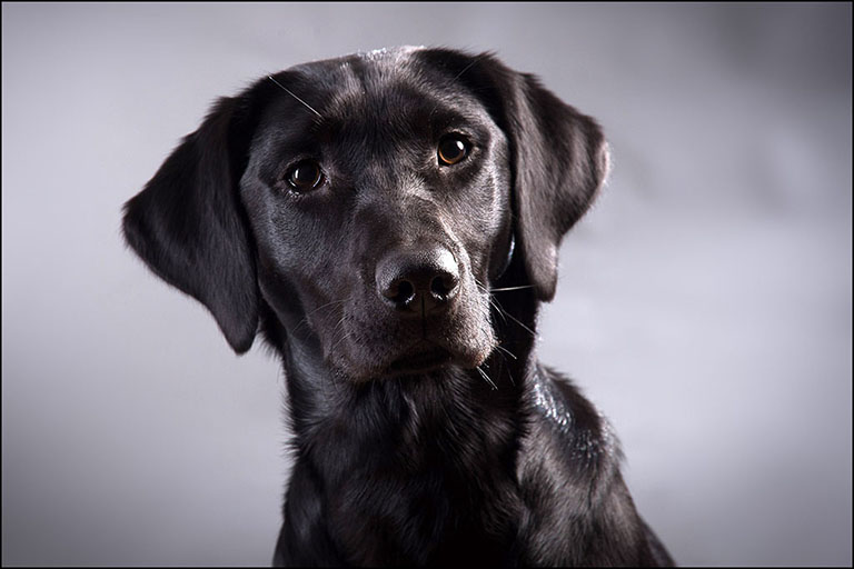 pet photography by Harrison Lord Photography