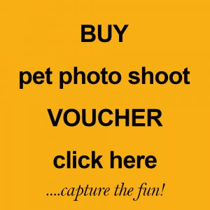 pet photo shoot voucher by Harrison Lord Photography
